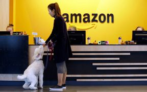Amazon The Most Dog-Friendly Tech Company