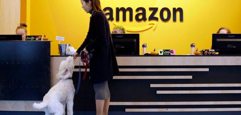 Amazon The Most Dog-Friendly Tech Company