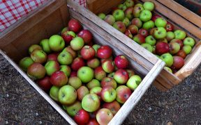 Washington Apple Industry