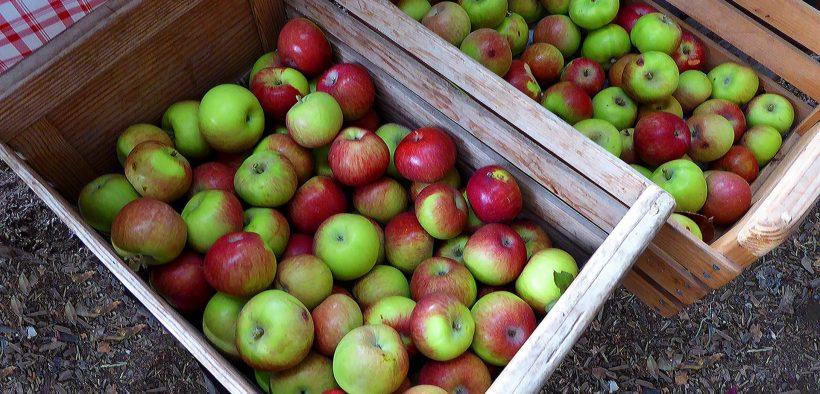 Washington Apple Industry